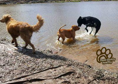 Pets at Play 3